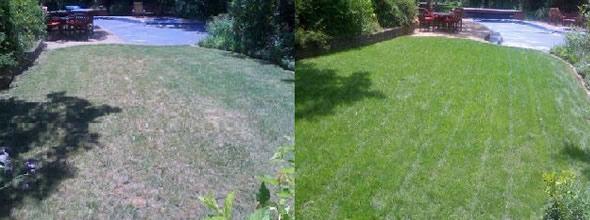 Portland organic lawn fertilizer